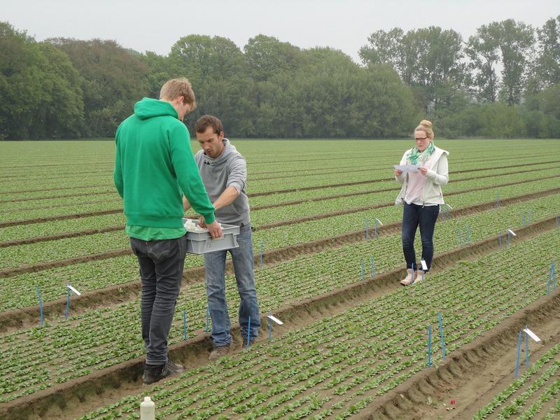 Gartenbauingenieur Studium